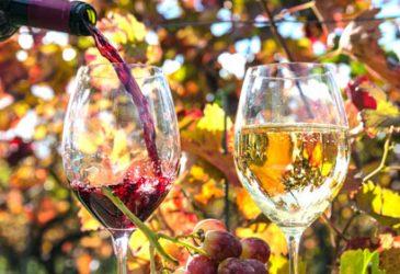 Unsere Genießertour zu den besten Weingütern Südtirols
